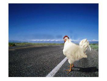 poulet philosophie